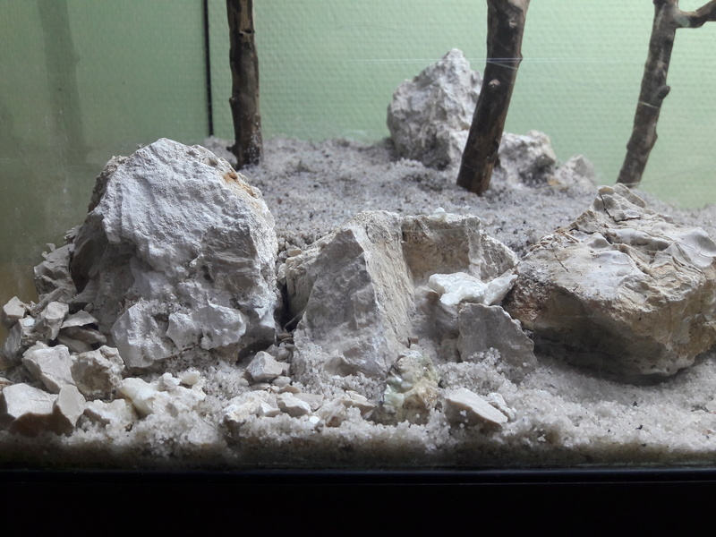 Forest Aquascape 20161222