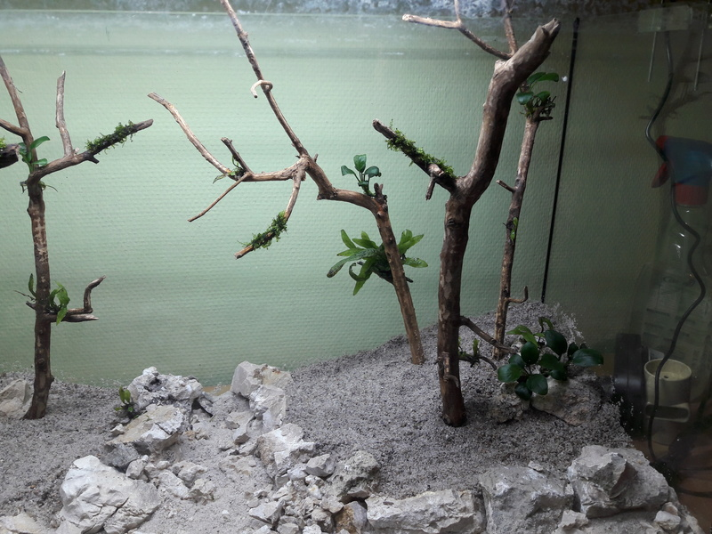 Forest Aquascape 20161231
