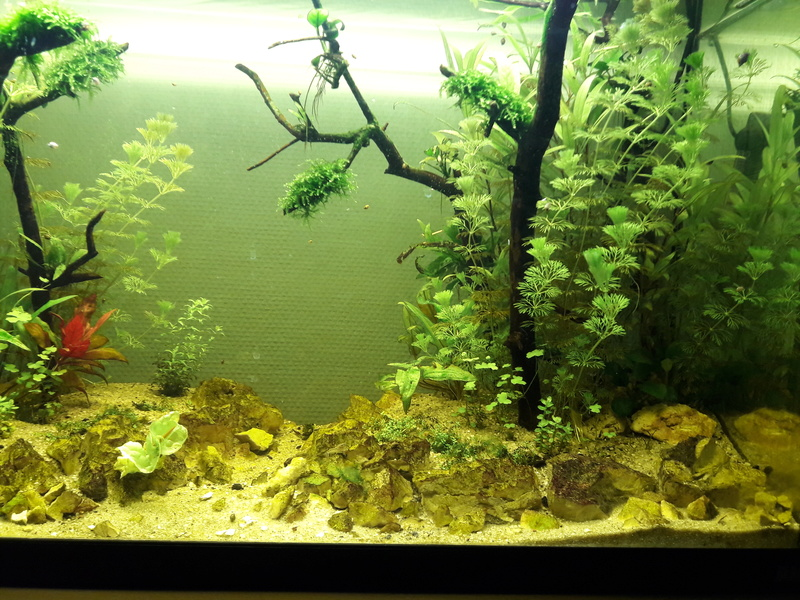 Forest Aquascape 20170113
