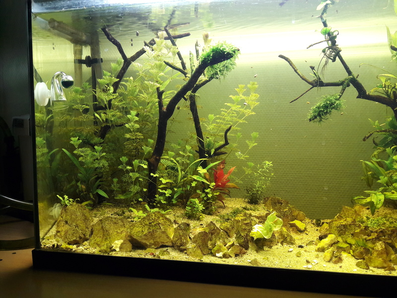 Forest Aquascape 20170114