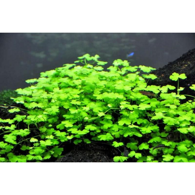 Forest Aquascape Hydroc10