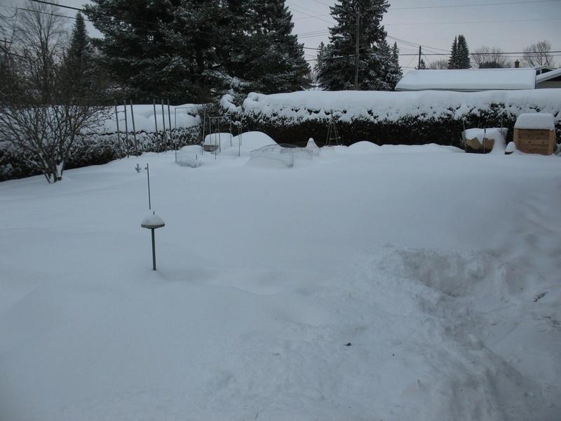 Winter Gardens - Photos - Page 4 Img_3321