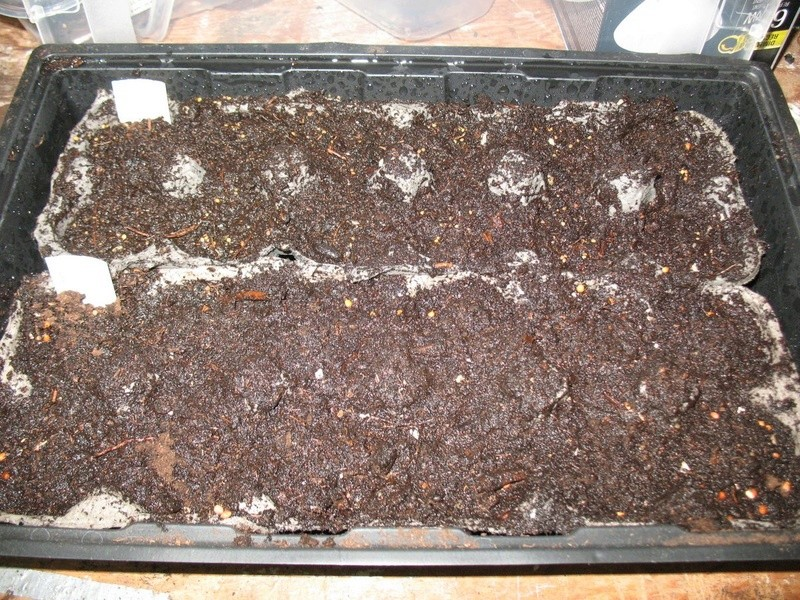 microgreens - Microgreens Gardening - Page 7 Img_3410
