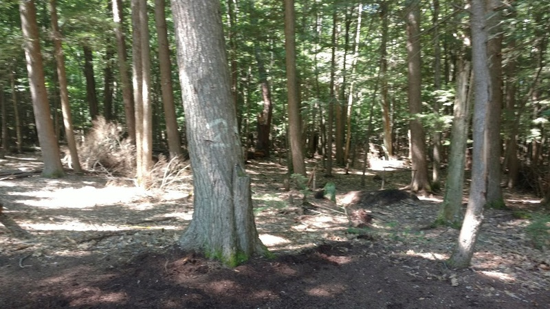 Post your favorite romping grounds  Img_2012