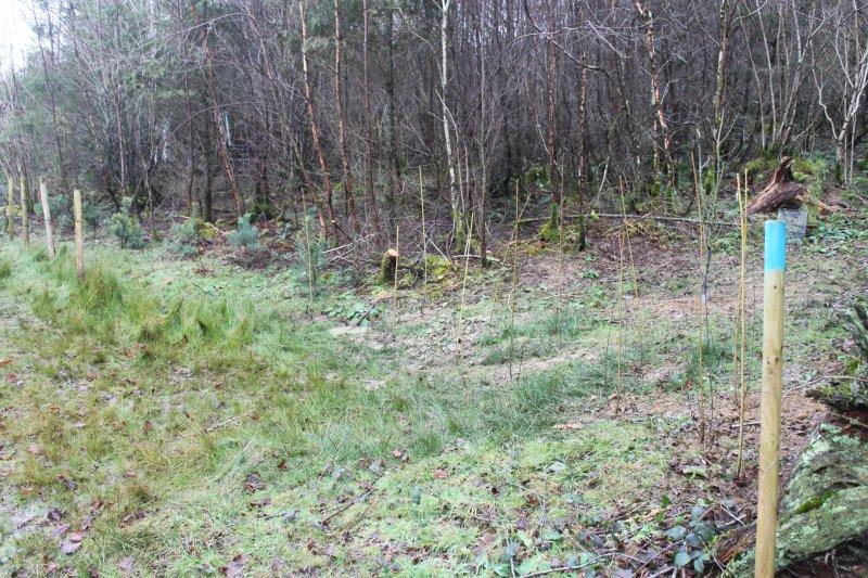 Woodland - Page 3 More_o11
