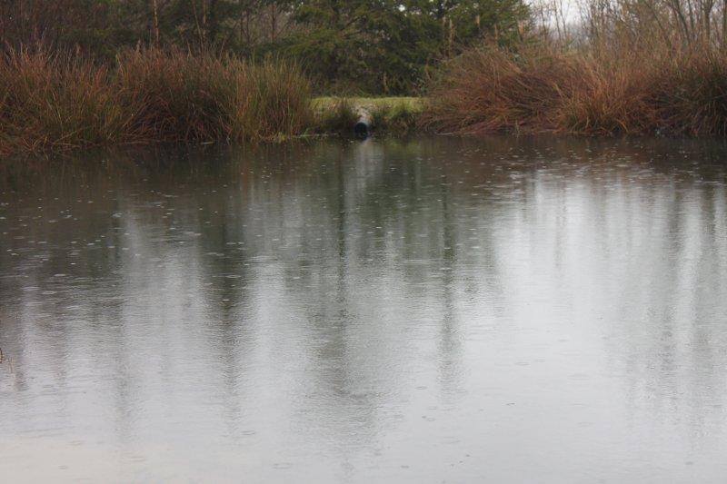 Woodland - Page 3 Rain_o10