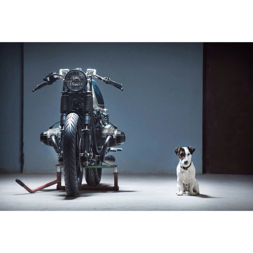 C'est ici qu'on met les bien molles....BMW Café Racer - Page 3 Dog-tu11