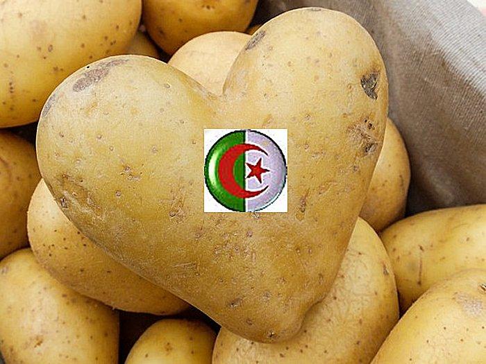 Algérie: Hymne a la patate  تمجيد البطاطس  في  بلاد  الجزائر  Pomme-10