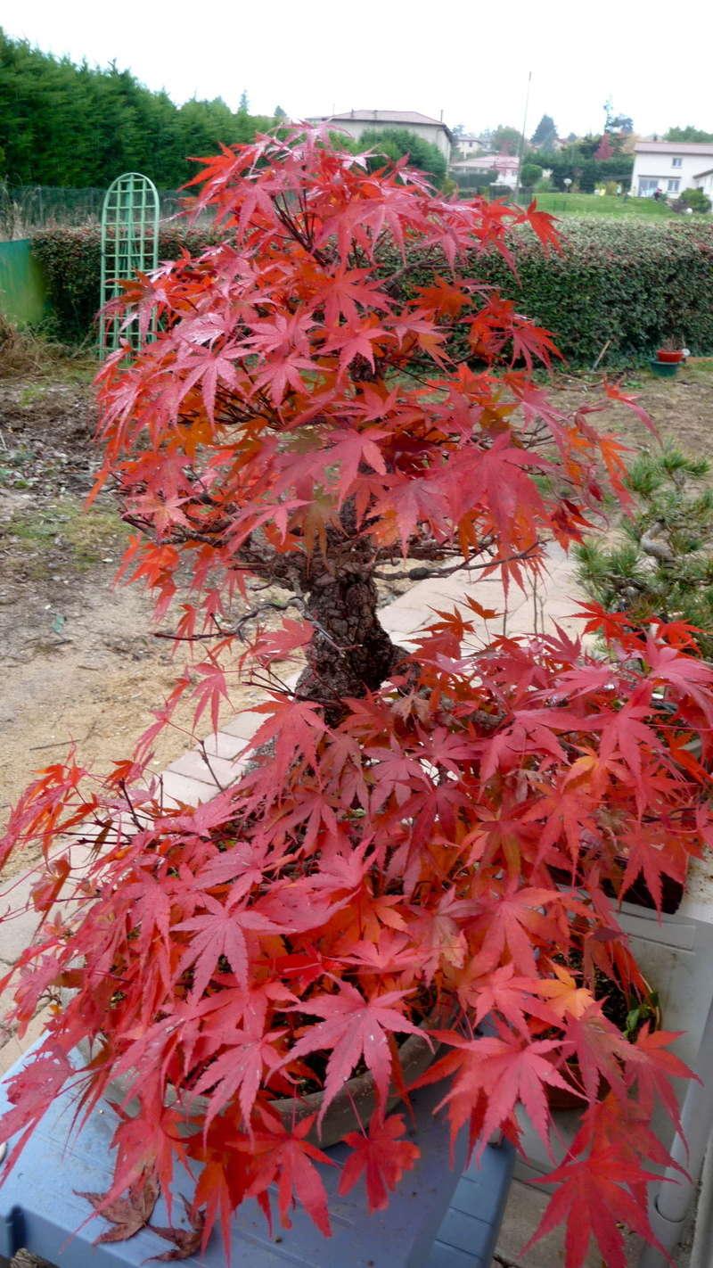 Printemps bonsaï - Page 2 P1070812