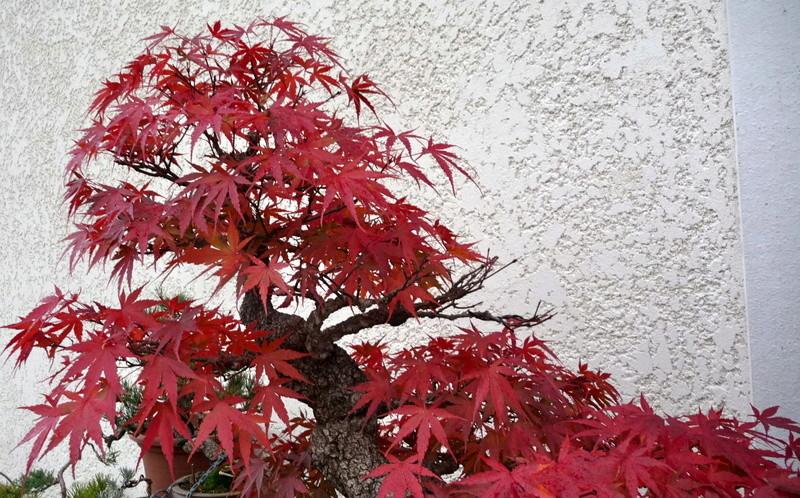 Printemps bonsaï - Page 2 P1070814