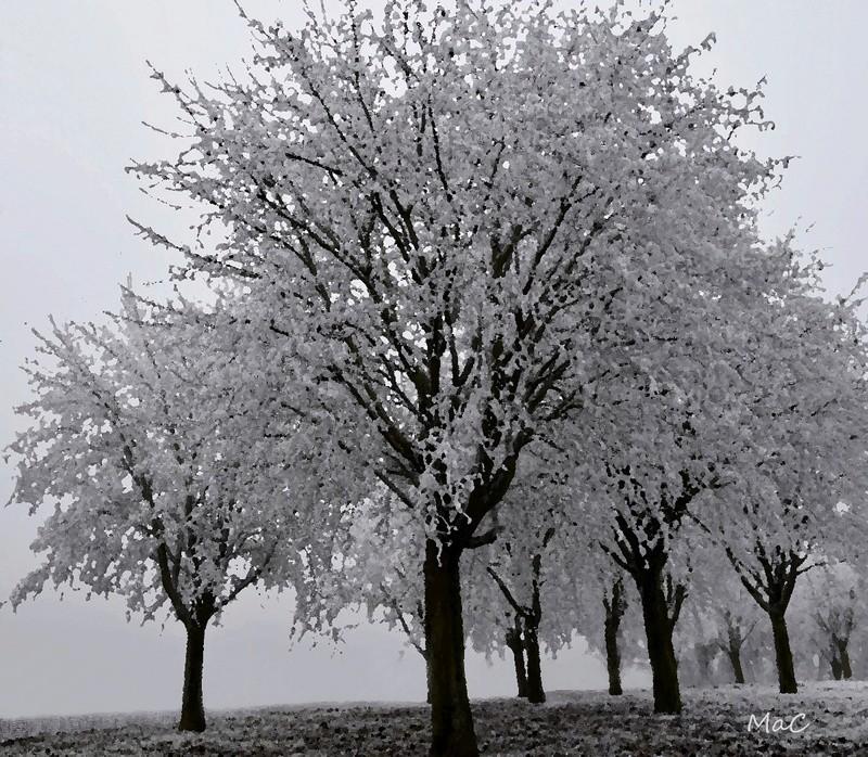 Pour ne pas rester que de glace: Les photos hivernales _mac2310