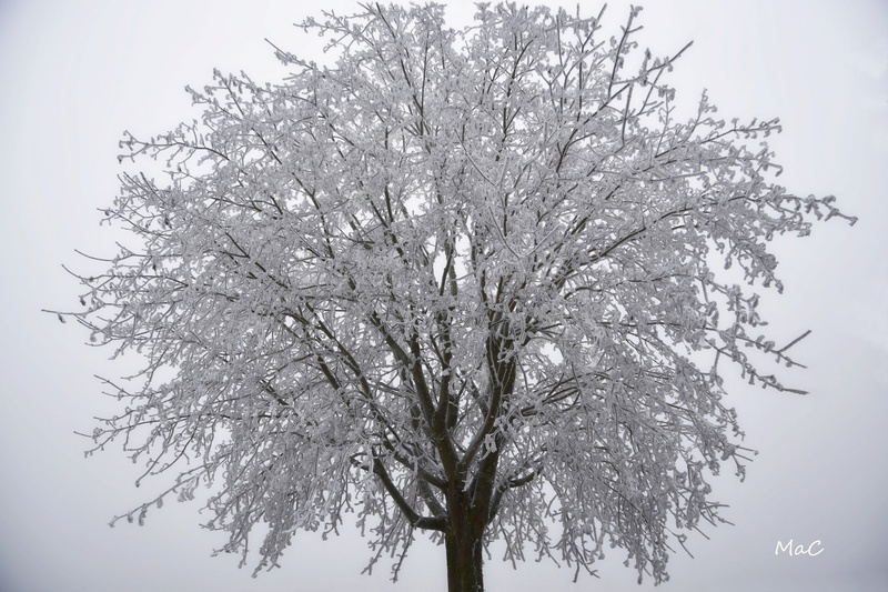 Pour ne pas rester que de glace: Les photos hivernales _mac2311