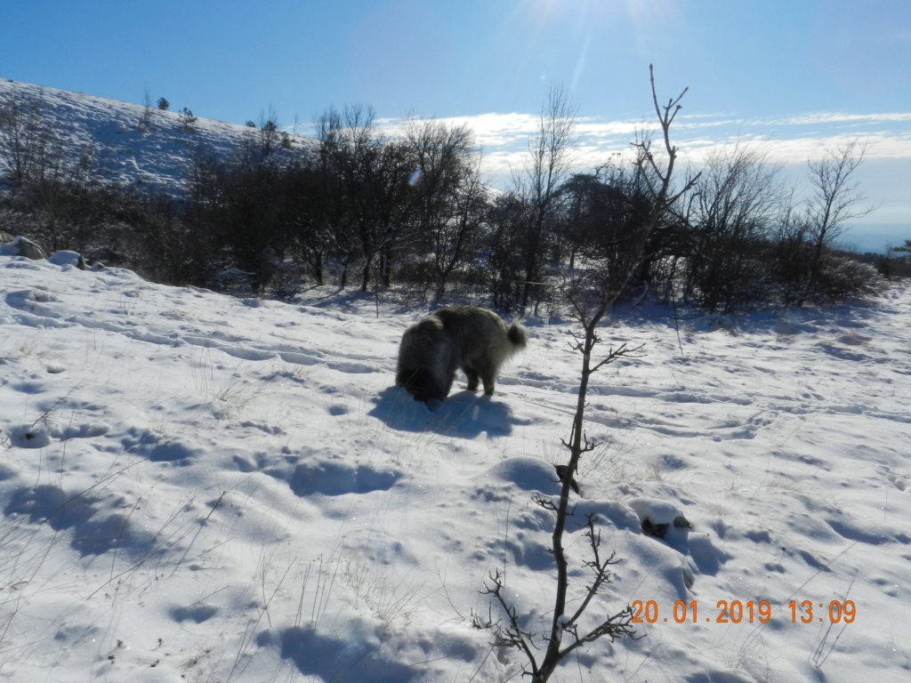 20 gennaio 2019, con il 3 Kraji sul monte Golic 20_gen28