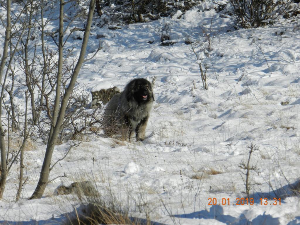 20 gennaio 2019, con il 3 Kraji sul monte Golic 20_gen32