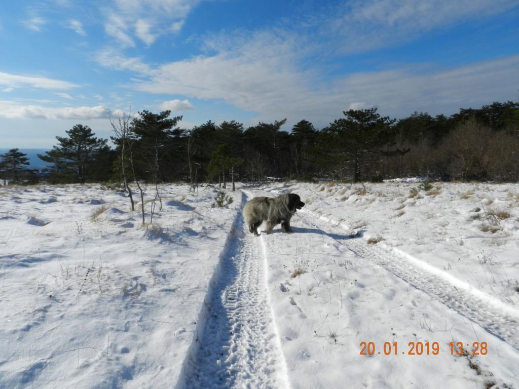 20 gennaio 2019, con il 3 Kraji sul monte Golic 20_gen34
