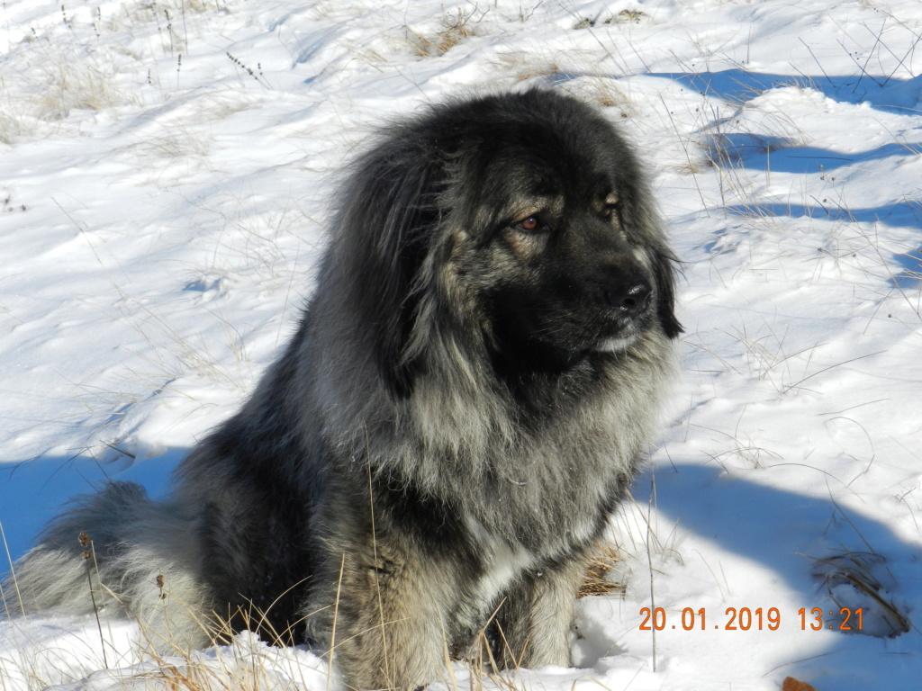 20 gennaio 2019, con il 3 Kraji sul monte Golic 20_gen35