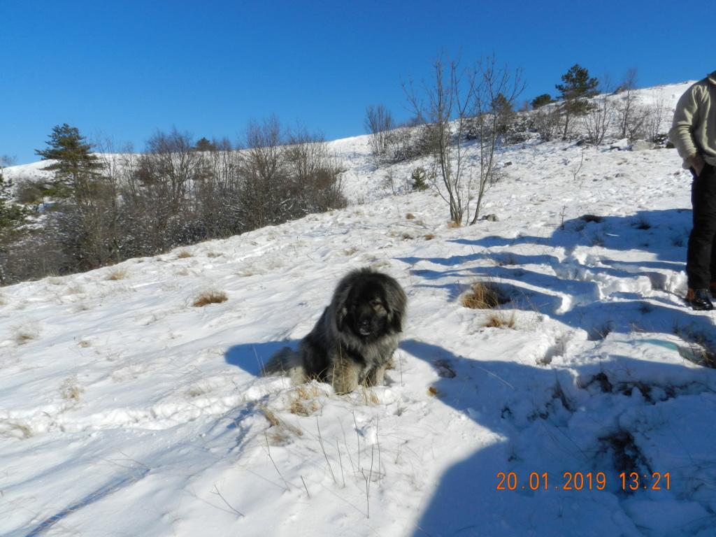 20 gennaio 2019, con il 3 Kraji sul monte Golic 20_gen36