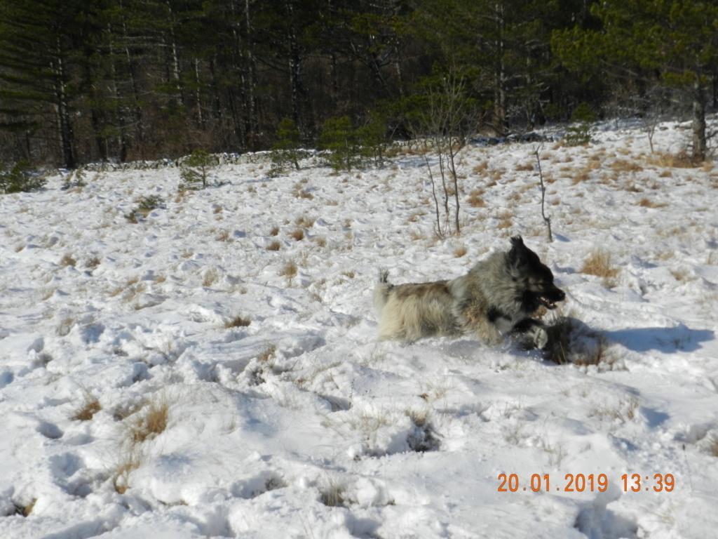 20 gennaio 2019, con il 3 Kraji sul monte Golic 20_gen38