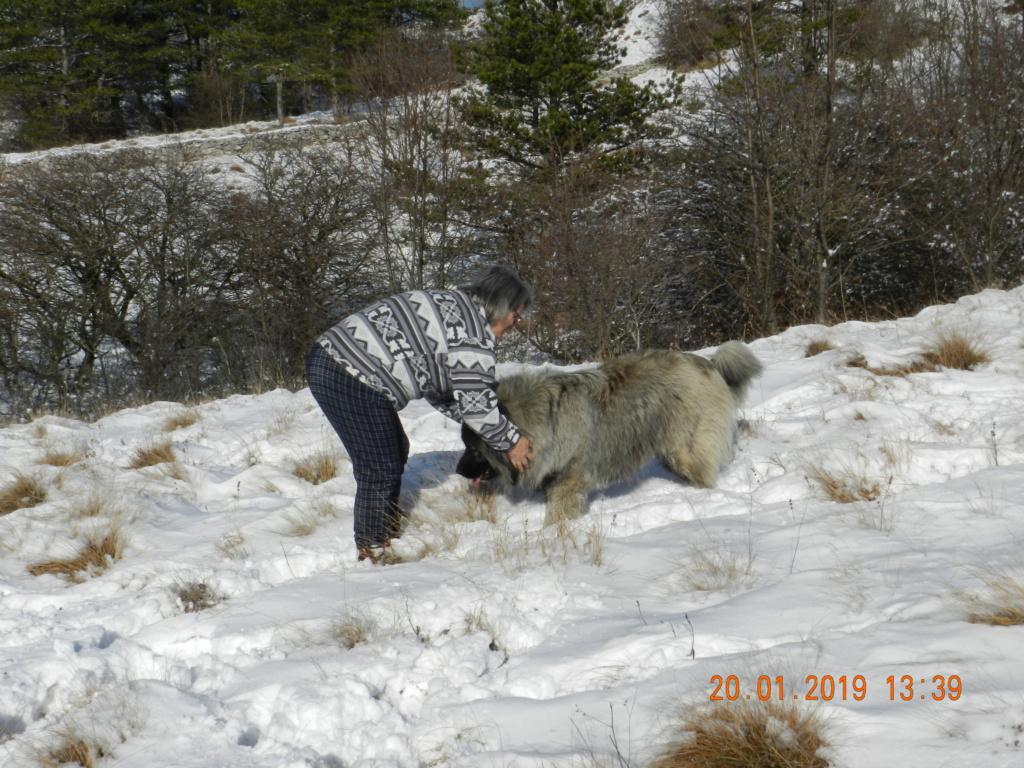 20 gennaio 2019, con il 3 Kraji sul monte Golic 20_gen40