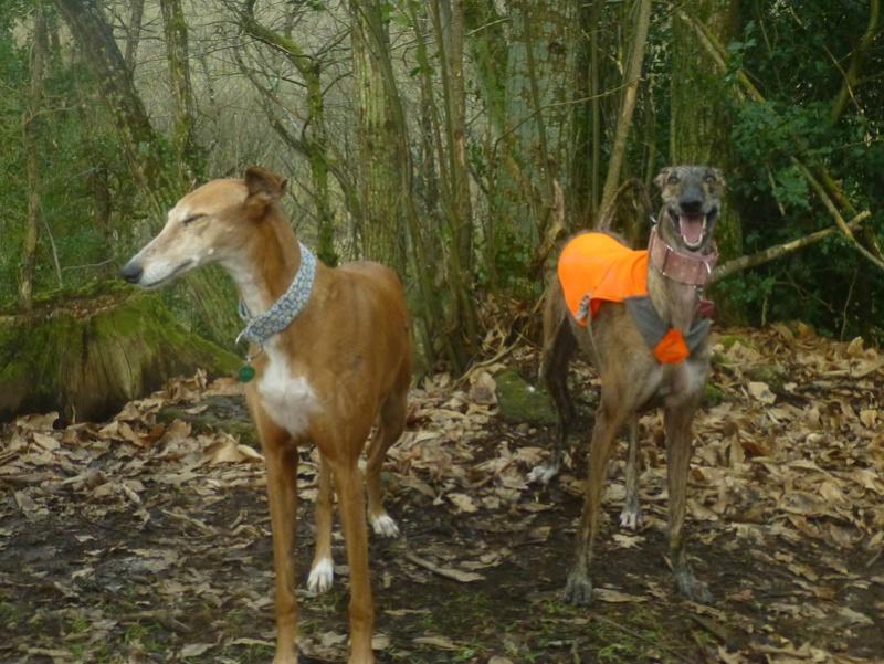 Kika galga 7 ans 1/2 marron  Scooby France  Adoptée  - Page 5 P1150710