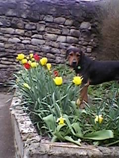 Pourquoi balader son chien dehors malgré le grand jardin à la maison? Sp_a0510
