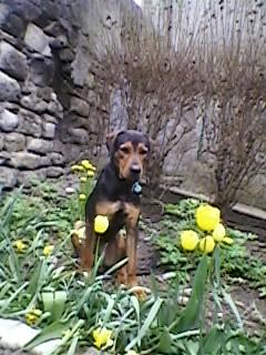 Pourquoi balader son chien dehors malgré le grand jardin à la maison? Sp_a0511