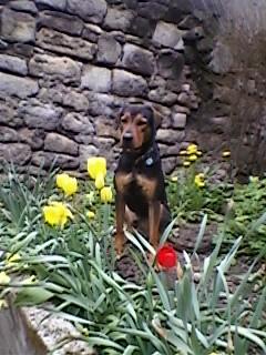 Pourquoi balader son chien dehors malgré le grand jardin à la maison? Sp_a0512