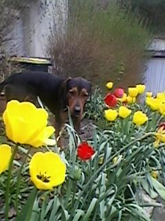 Pourquoi balader son chien dehors malgré le grand jardin à la maison? Sp_a0513