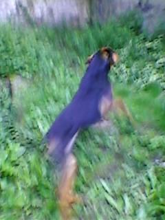 Pourquoi balader son chien dehors malgré le grand jardin à la maison? Sp_a0611