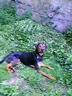 Pourquoi balader son chien dehors malgré le grand jardin à la maison? Sp_a0710