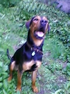 Pourquoi balader son chien dehors malgré le grand jardin à la maison? Sp_a0712