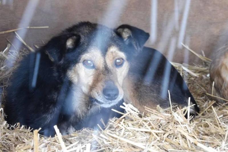 HATSU, mâle croisé, né en 2006, petite taille (Pascani)- adopté par Trish (30)- décédé  Hatsu10