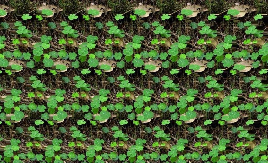 Stereograms Green10
