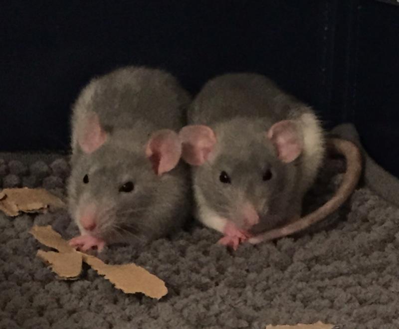 Rat et Aération Img_210