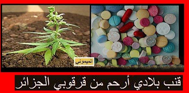 Le chanvre de mon pays vs psychotrope Algerien قنب بلادي أرحم من قرقوبي الجزائر Drog1110