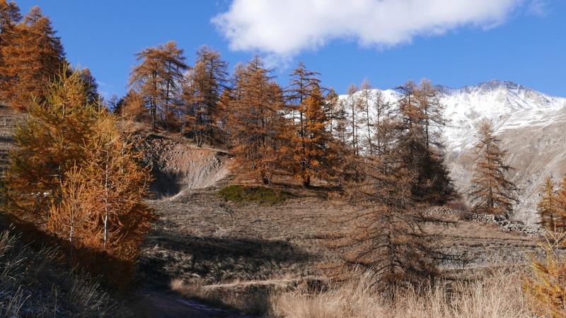 Tempête de ciel bleu et d'hiver.. P1090010