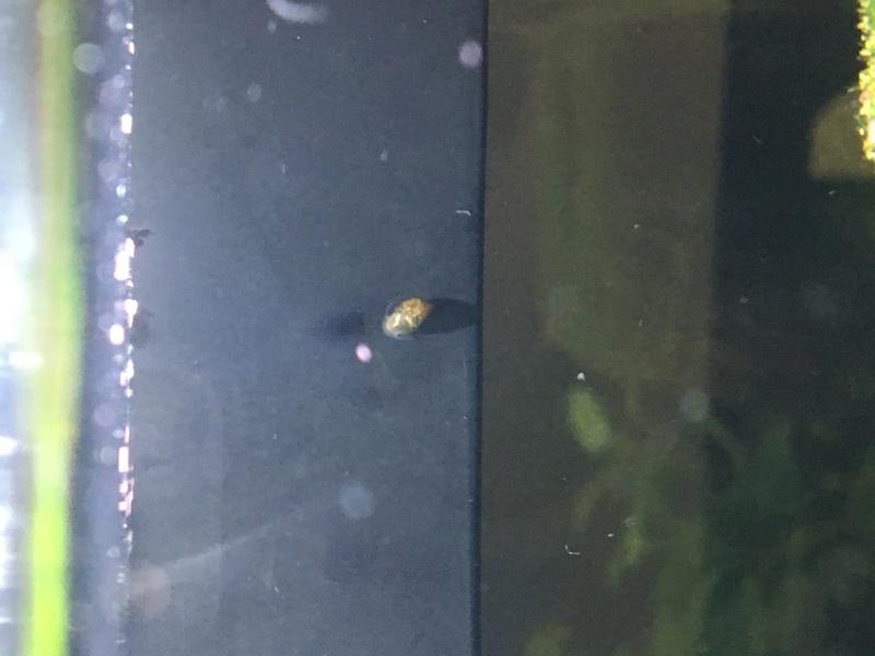 Apparition d'un escargots Image110