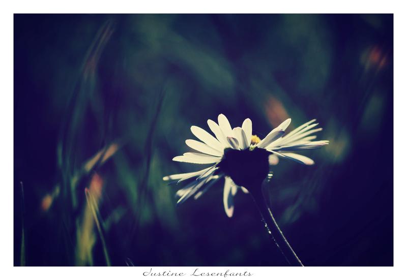 Fleur .. Sous les projecteurs.  A210