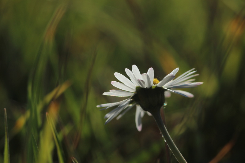Fleur .. Sous les projecteurs.  Img_3910