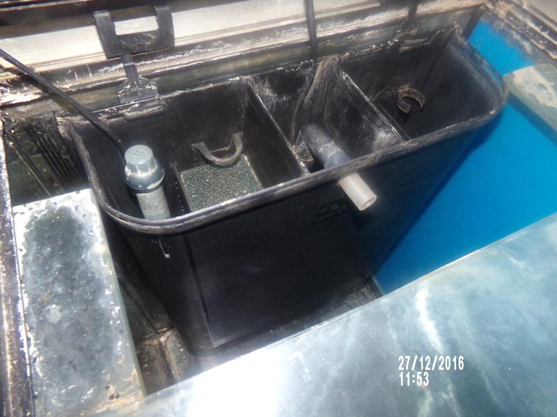 Filtre interne et mise en route de mon Aquarium. 108_0611