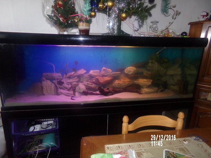 Filtre interne et mise en route de mon Aquarium. 108_0612