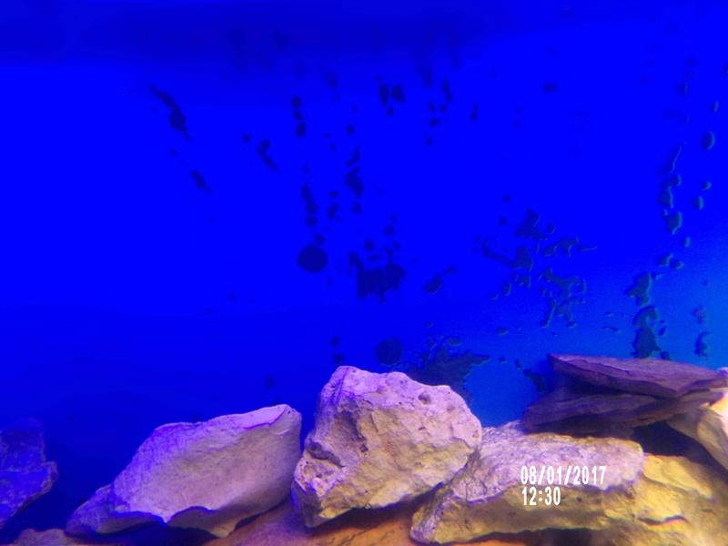 Filtre interne et mise en route de mon Aquarium. 108_0810