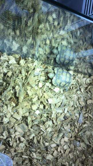 Terrarium pour tortue leopard 930f4c10