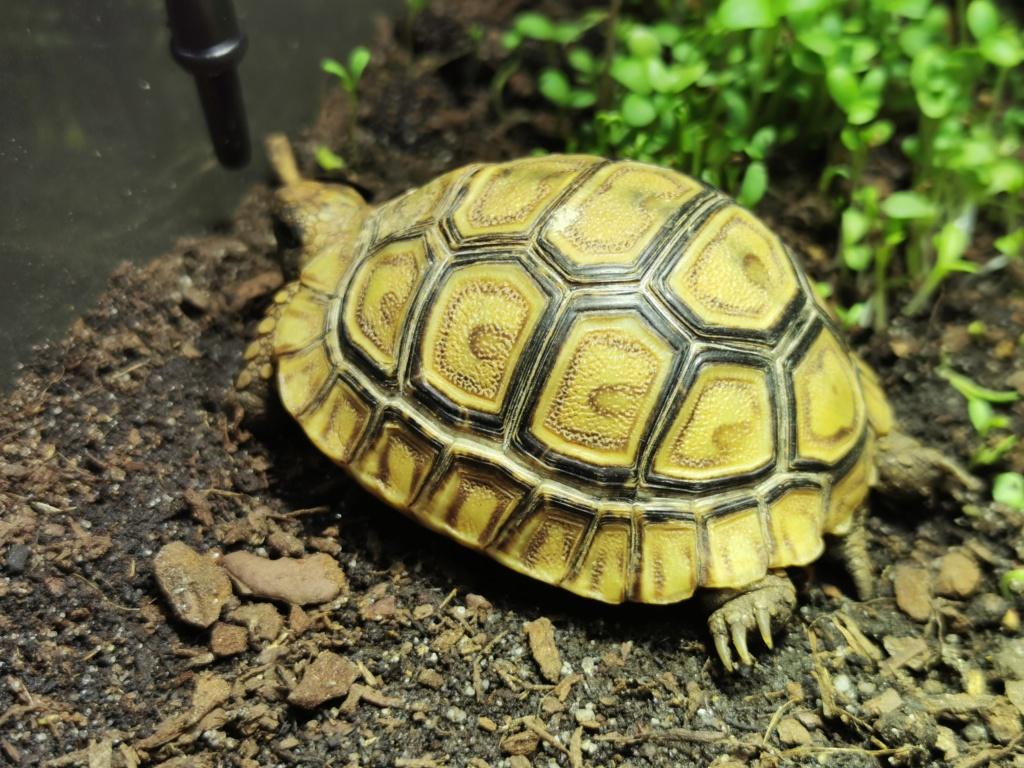 Terrarium pour tortue leopard - Page 2 Img_2013