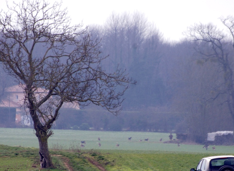 Rallye Au Pas Du Lièvre - Page 3 01118