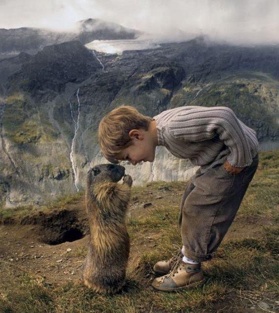Quelques peintures Marmot10