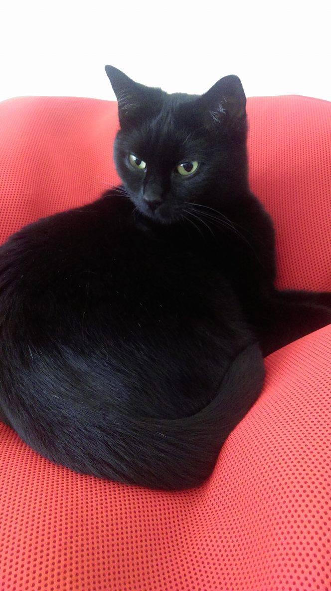 Pépite, femelle européenne noire née le 01/09/2014 - Page 3 15225310