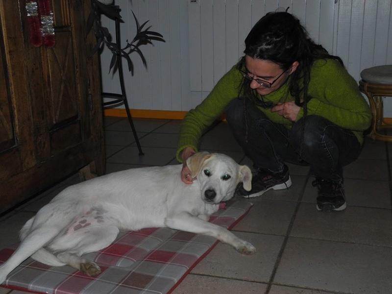 LAIKA née en 2012 - (Alina) - Adoptée via la SPA Sud Alpine    Laika10