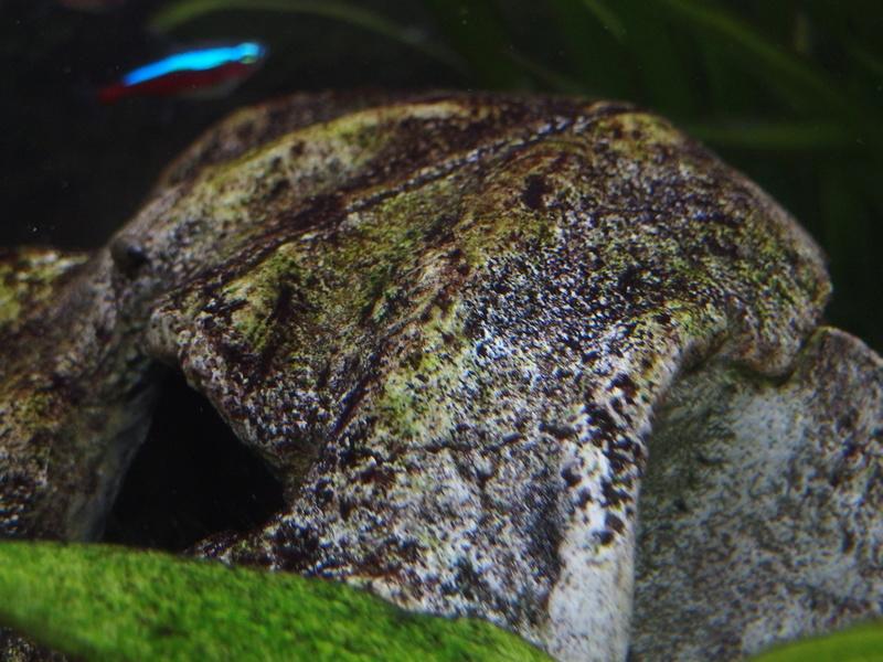 Algues résistantes, que faire ? Pb060016
