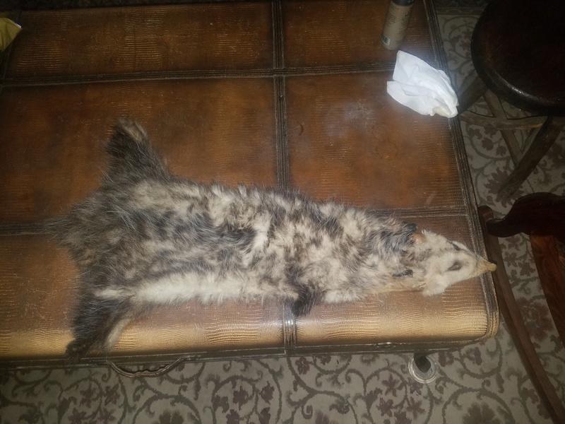 Possum pelts  14820010
